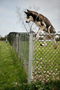 انتخاب پنل سگ بزرگ
